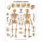 SC1001 - Poster scheletro umano