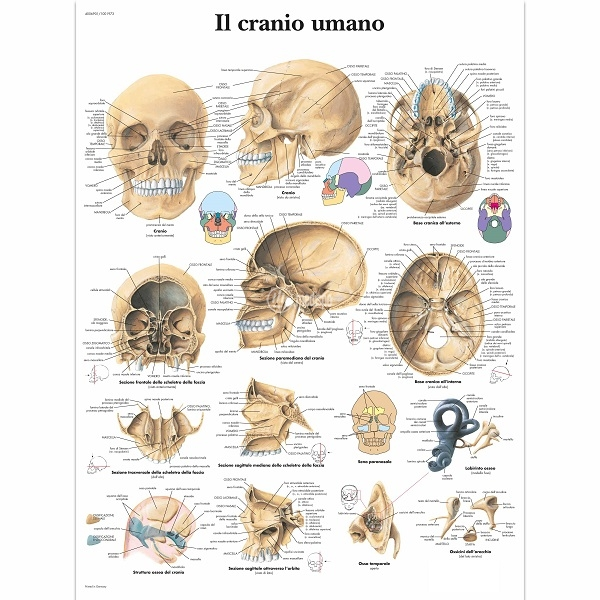 Poster per studio medico