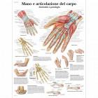 SC1008 - Poster mano e articolazione del carpo