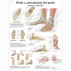 SC1011 - Poster del piede